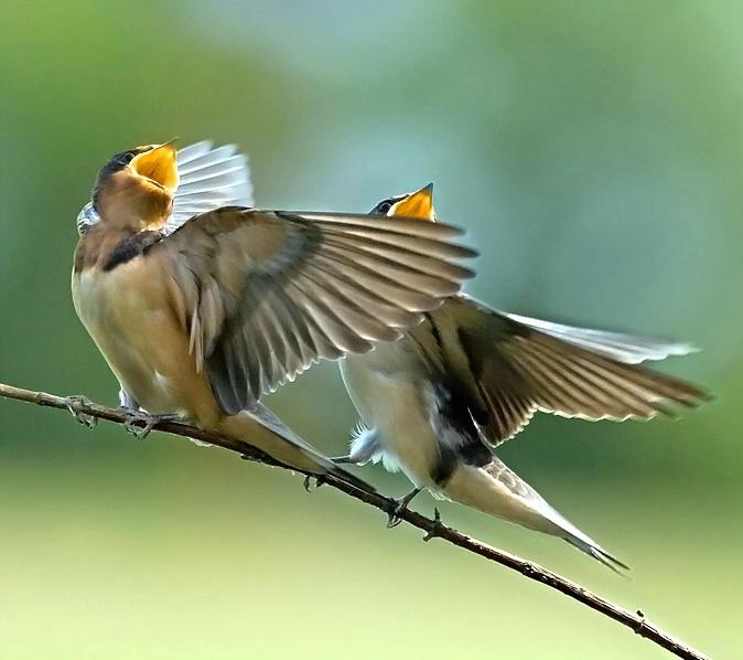 Пісні про птахів